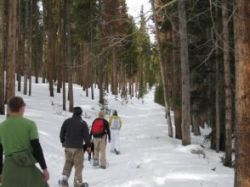 A Moose Day group, on cross country skis skiing through a lodgepole pine forest.