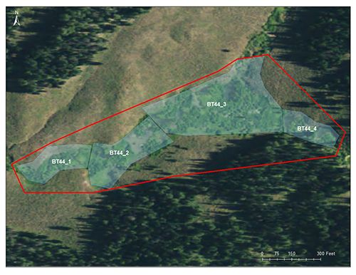 Pine Knoll catchment